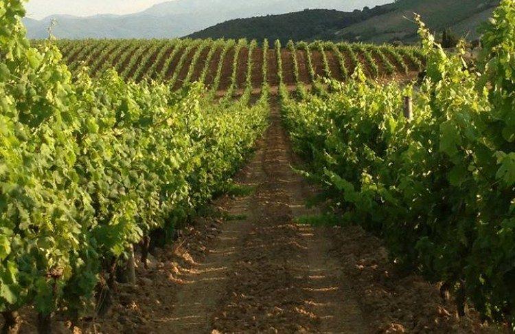Vin-domaine-Gentile